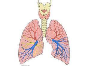 支气管平滑肌痉挛