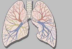 支气管分泌物增加