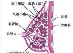 乳房红肿热痛